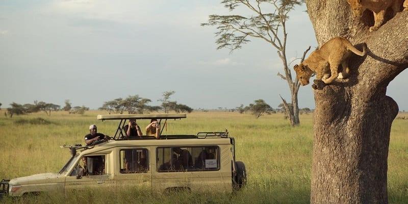 Tanzania wildlife safari Serengeti Kilimanjaro