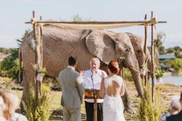 African safari wedding price and packages in Uganda Kenya Tanzania Rwanda