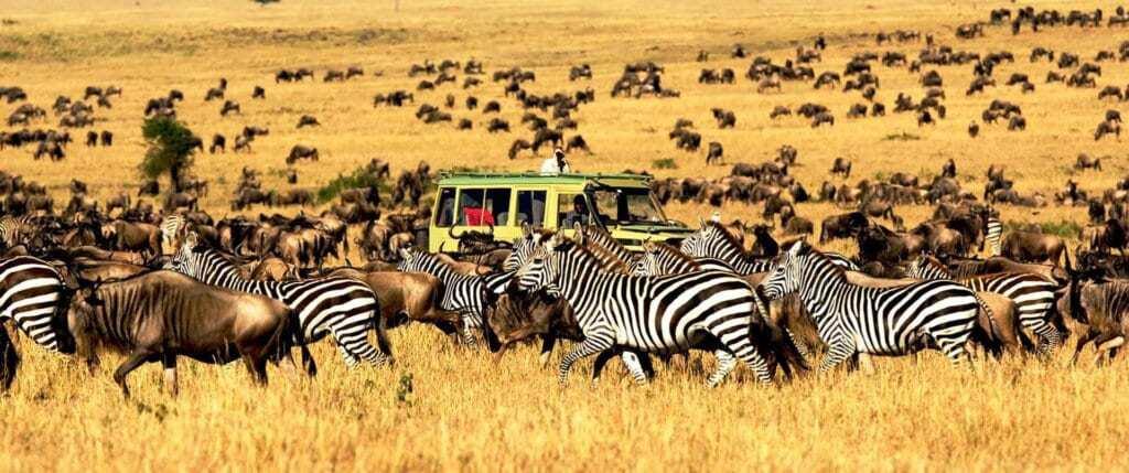 Top 10 East African tour Safari Perks and Destinations