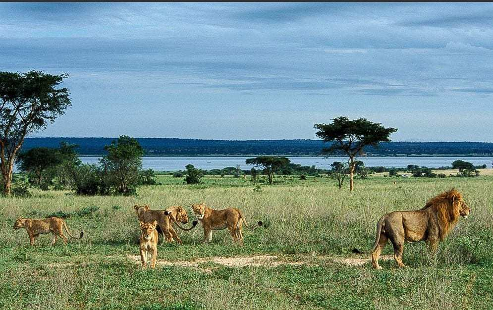 What to do and see at Murchison Falls National Park