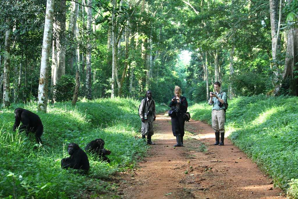 things to do in Murchison falls NP Budongo forest gorilla tracking